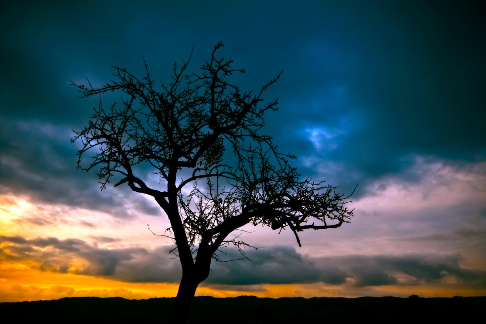tree-213980_1920